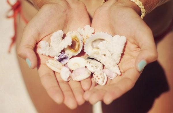 bora bora seashells