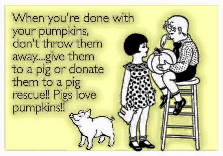 If you live near a farm animal sanctuary or pig rescue organization, this is a great idea! (Other critters - like porcupines - love pumpkins too, so please consider animal sanctuaries before you pitch those pumpkins!)