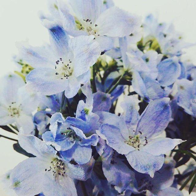 【kimonotoveya】さんのInstagramをピンしています。 《ワークショップ行います!ぜひいらしてくださいね( v^-゜)♪ 1月28日 吉祥寺cafe22 ☆14-16時1時間でも可☆ Toveya WS 武藤由貴子  着付けのみ、お花のみ等 選べます! ご希望あれば気に入ってる着物、花器 花の持ち込みも大丈夫です☆ ☆着付けとフラワーアレンジWSのご紹介☆ 一回\2,500  #着物#kids#吉祥寺 #お稽古#着付けのお稽古#一緒 #お花見#桜#楽しい#休日#遊ぶ#学ぶ #女性限定#お着物#嬉しい#ありがとう #お正月#ランチ#ママ友 #七緒#東京#ネイル#インスタ#インスタデイリー##幸せ#幸せな時間#たのしい#嬉しい》