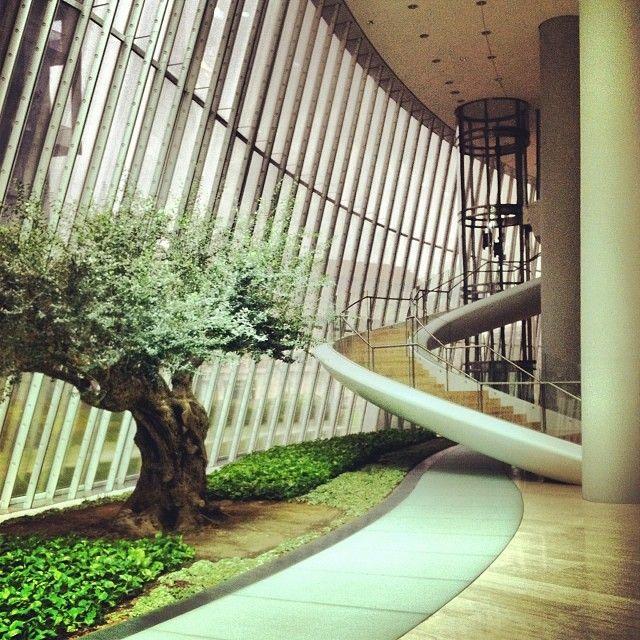 Un olivo milenario en la Torre Iberdrola.