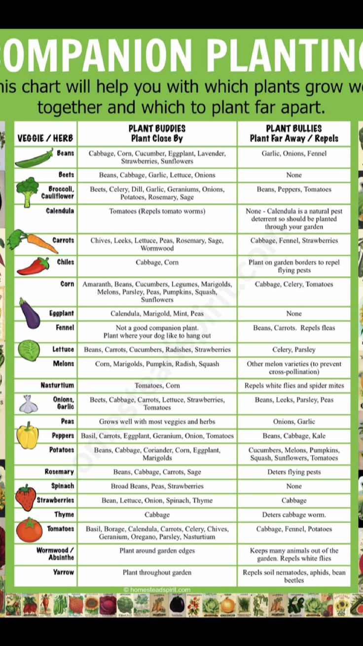 Pin By Leah Maria On How Does Your Garden Grow Planting 640 x 480