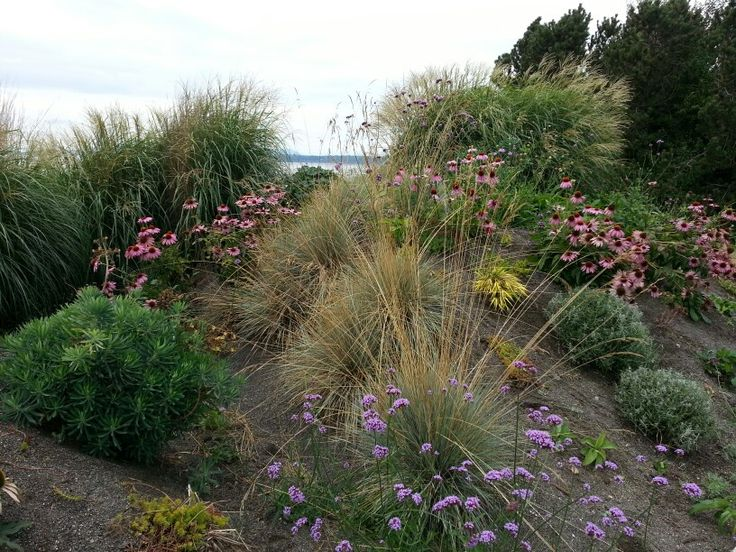 Glendon Septic Mound Planting Client S Plants Pinterest