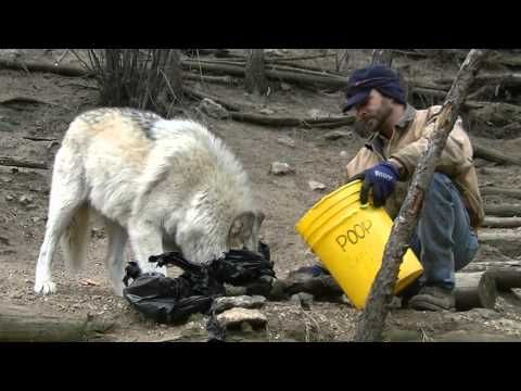 WOLF - Meet the Wolves - Isabeau - YouTube