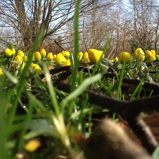 My garden 26 febr 2015 Ann-Sofi Sweden