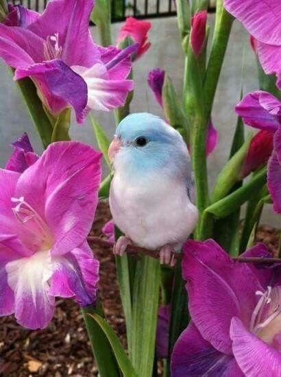 Les 25 meilleures id es de la cat gorie cage perroquet sur for Oiseau domestique interieur