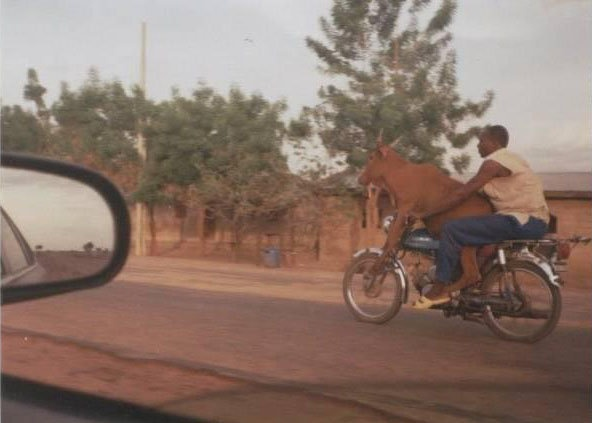 Now this is a new one....the sights you see in Africa! LOL