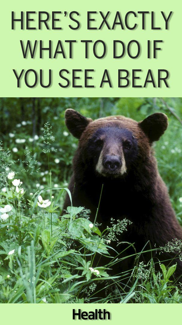 Here S What You Should Do If You See A Bear Whether You Re On The Trail Or In Your Backyard Bear Large Backyard Landscaping Backyard