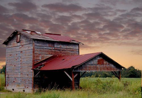 a vanishing southern structure... the tobacco barn