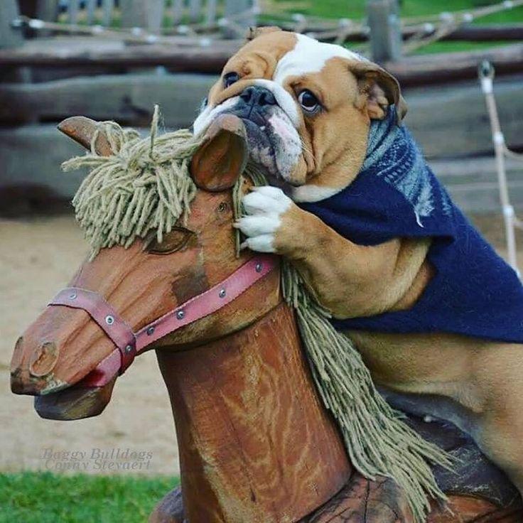 ♥ Baggy Bulldogs ♥ que gordo e fofo.... bem se virmos bem cães gordinhos são os mais gostosos... É por isso que todos os cães são gordinhos... pois são todos gostosos -joanete