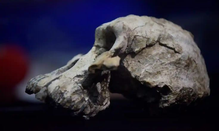 Skull of humankinds oldest-known ancestor discovered