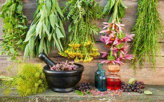 ru.depositphotos.com/ChamilleWhite: Лекарственные растения целебные травы сбор
