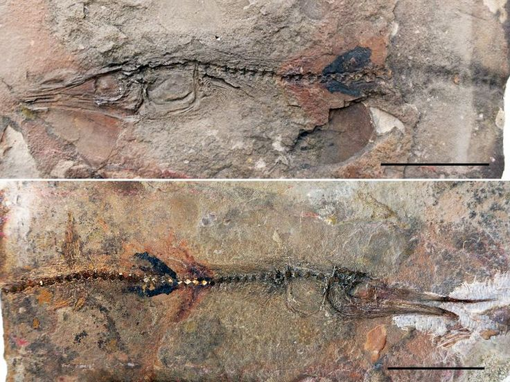 Young tourist finds 90 million year old fish fossil at colombian monastery