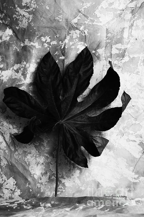 """""""Independent"""" Randi Grace Nilsberg #MetalPrints #AcrylicPrints #ArtPrints #Photographs #PhotoArt for sale."""