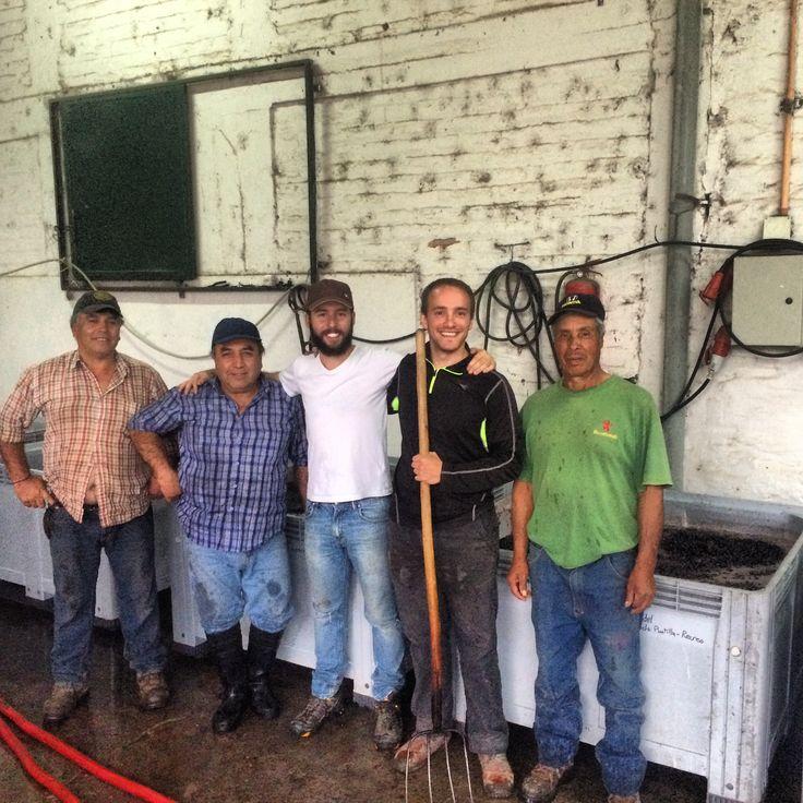 El equipo de vendimia! De izquierda a derecha:  Pato, Juan, Giancarlo, Fede, Lucho