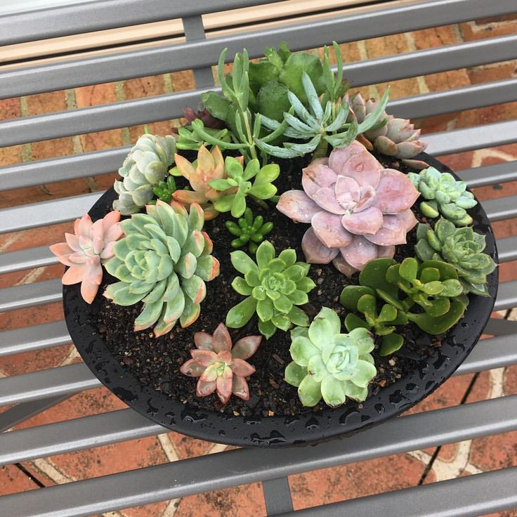 "Succulent Lover (@for_the_love_of_succulents) on Instagram: ""Succulent bowl"