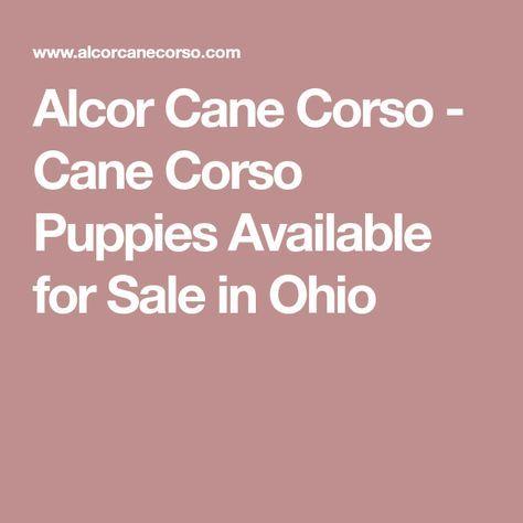 Alcor Cane Corso - Cane Corso Puppies Available for Sale in Ohio