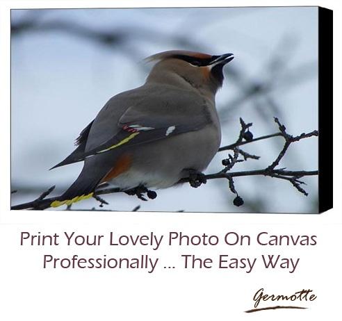 #canvasprinting #gallerywrap Canvas Printing and Gallery Wrap
