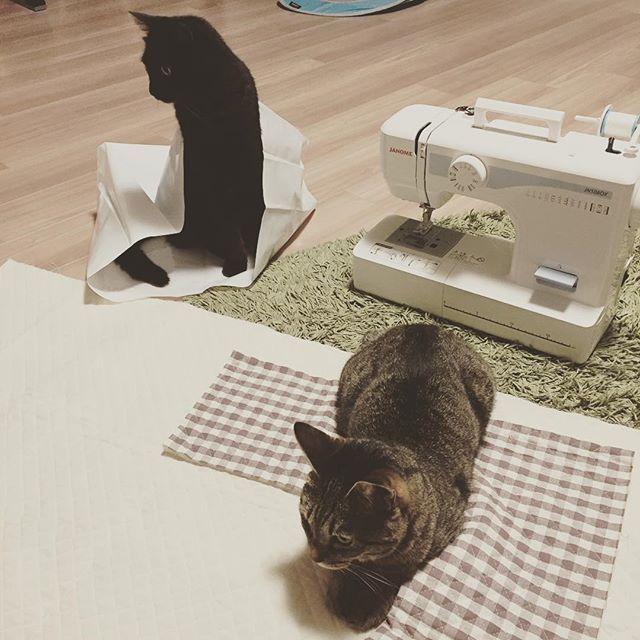 ミシンカバー作り断固反対組 #ミシン #初心者 #猫 #ねこ #cat #猫部 #黒猫 #catlover #catsofinstagram #catstagram #instacat #cat #blackcat #tabby #tabbycat #キジトラ