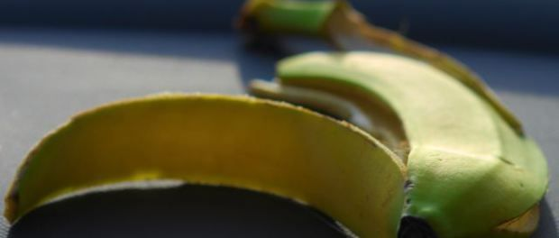Panama Disease: Bananas Slowly but Surely Being Driven to Extinction http://sostrenews.com/?p=9380