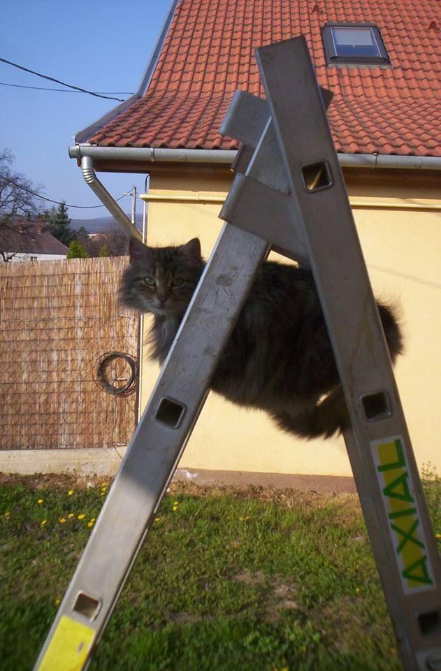 She also loves cats. RIP cirmos macska!