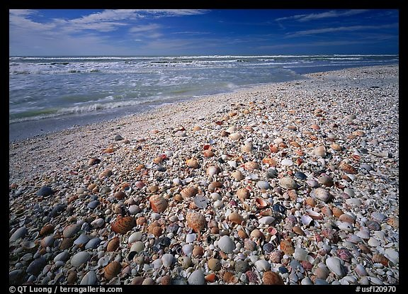 Sanibel Island and the best shelling in the world.