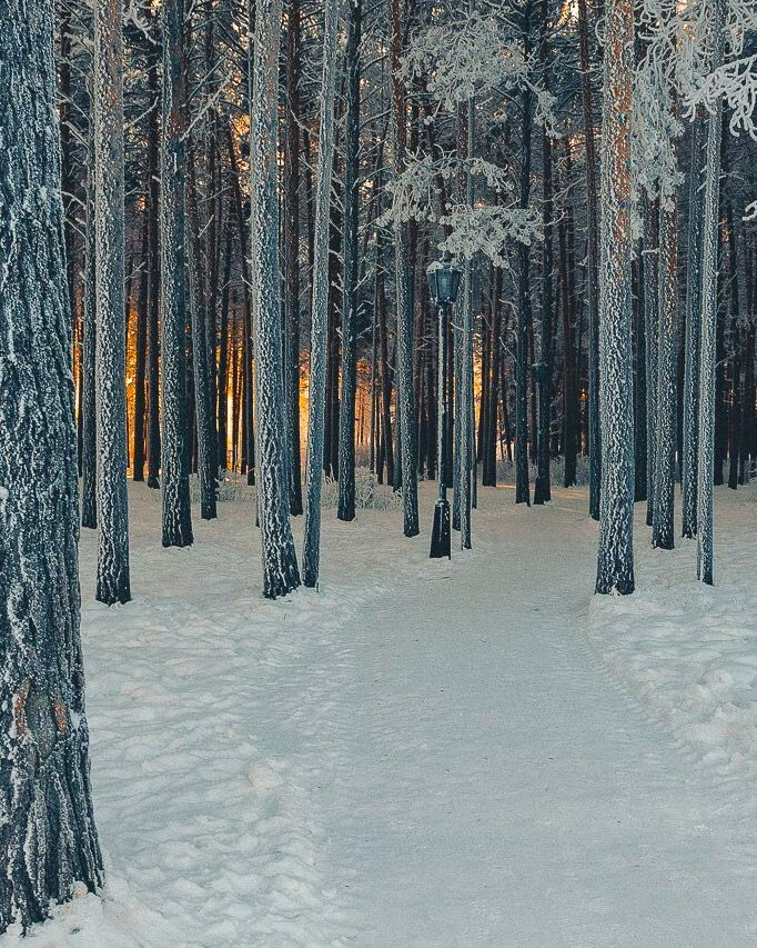 Path In A Snowy Forest With Sunlight In The Background No Location