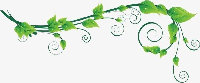 Green Vines Vine Clipart Green Leaf Png Transparent Clipart Image And Psd File For Free Download Clip Art Vines Green