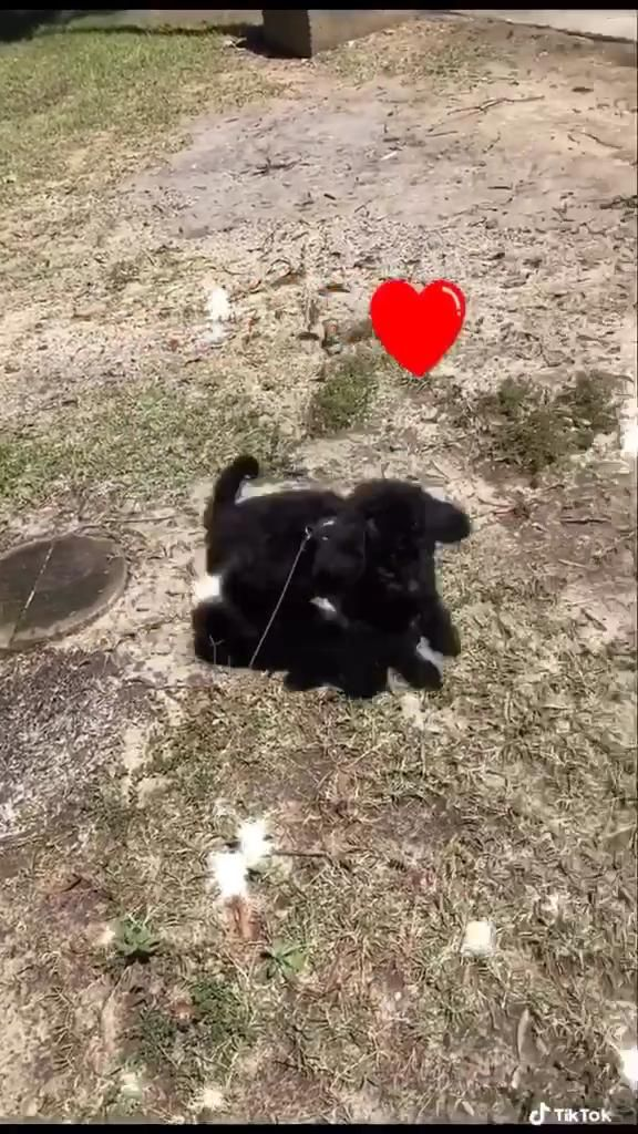 Day 1! [Video] Puppies, Dog lovers, Puppy care
