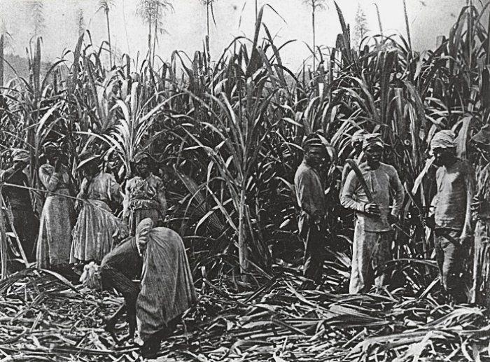 #Schiavitú, i Caraibi chiedono un risarcimento alla Gran Bretagna