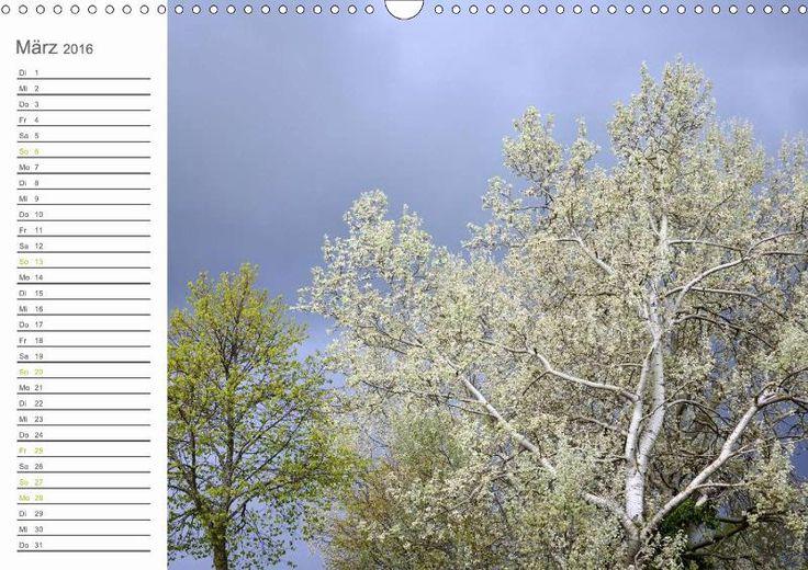 KALENDER 2016 | BÄUME und LICHT | Jetzt im Buchhandel und online erhältlich: www.calvendo.de/galerie/baeume-und-licht/?a=86892& | DIN A5 | DIN A4 | DIN A3 |