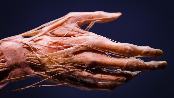 body exhibition에 대한 이미지 검색결과