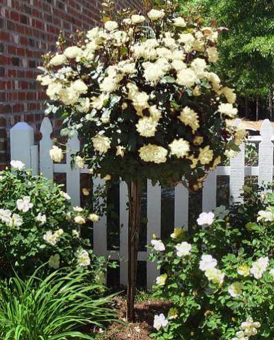 Image Result For Brighter Blooms Nurserya