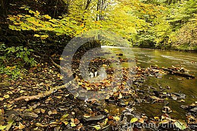 Banks of river through forest with fall colors on sunny day.