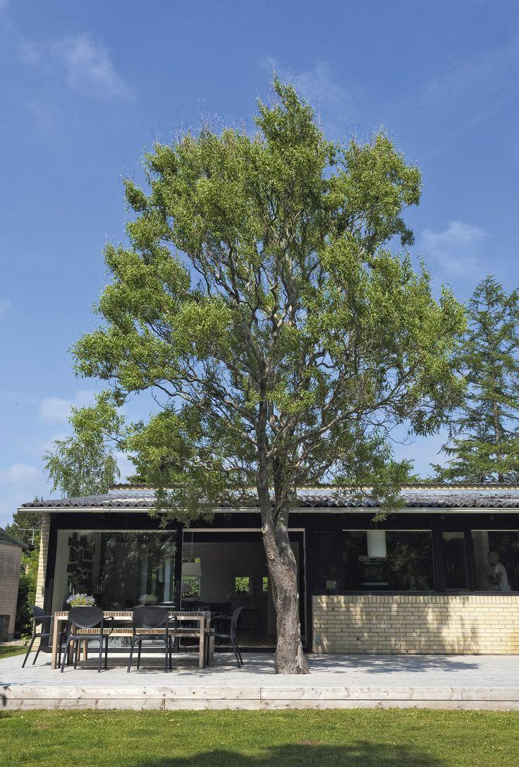 Superwood terrasse