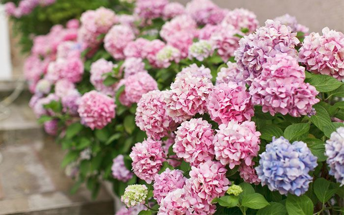 Fill your garden with plants on a budget! These fast-growing shrubs will put on plenty