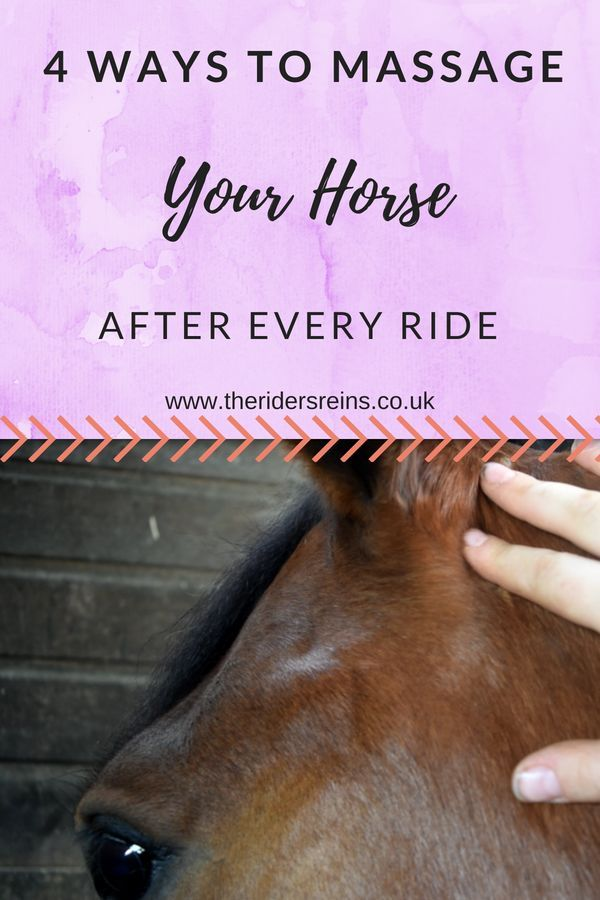 4 Ways To Massage Your Horse After Every Ride Horse Care Tips
