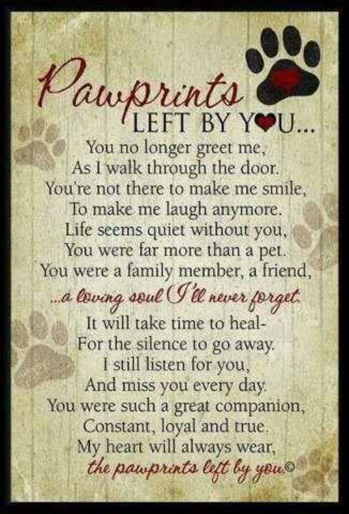 EEFor anyone that loses a pet ♱✝♰✞ @Nina Gonzalez Gonzalez Taggs