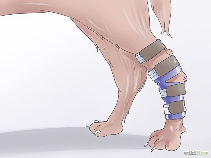 Heal a Torn Dog ACL Without Surgery Step 7.jpg