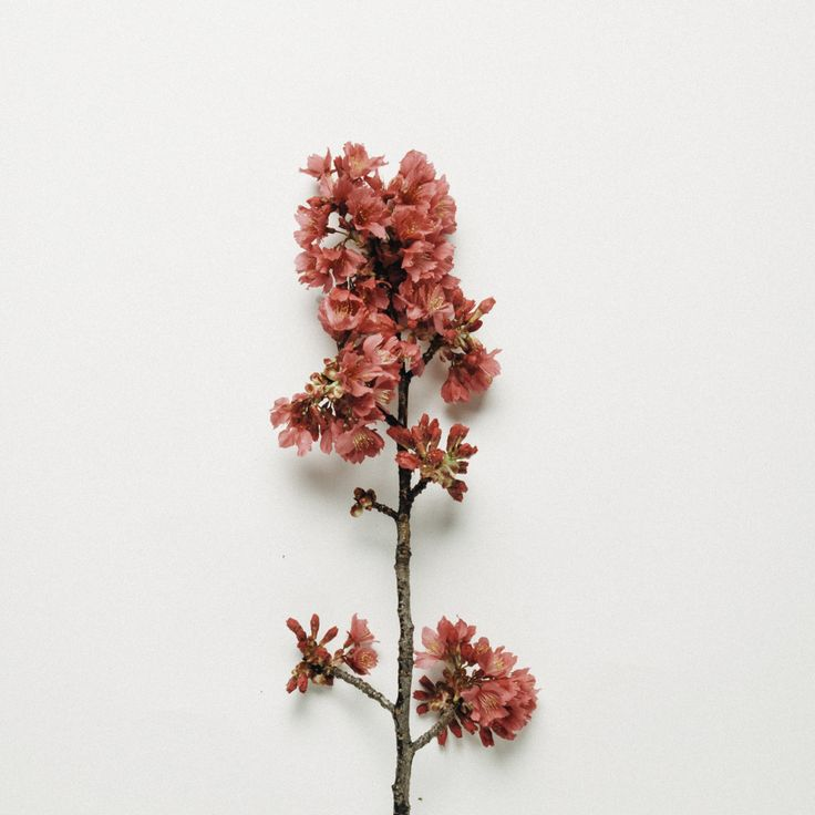 flora  photographed by Rakai Karaitiana