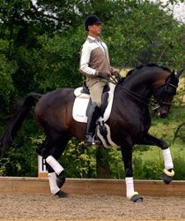 Elite dressage rider Carl Hester's 35 top tips on everything dressage – from finding the right horse, to training and stable management techniques!