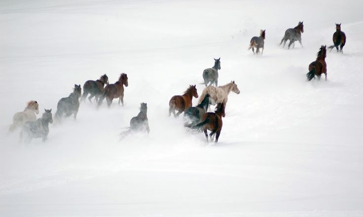 """At the tail end of the first of two record setting snowstorms this winter, 24"""", high wind and 15 degrees without wind chill. I saw the horses on the farm across the street from my front window were out in the storm and grabbed my camera, layered up and decided to see if I could get some photos."""