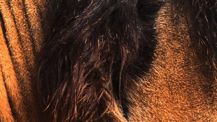 HVOB - Lion |Official Video [Stil vor Talent]