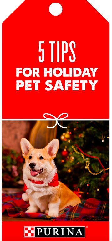 Holiday food, decorations and gifts can pose a risk to pets. Purina Veterinarian Dr. Zara shares tips for a seamless holiday season. For example, add print safety tags for items that aren't pet friendly and keep them out of reach of curious dogs (link to download inside article!) Learn more pet safety tips on Purina's website.