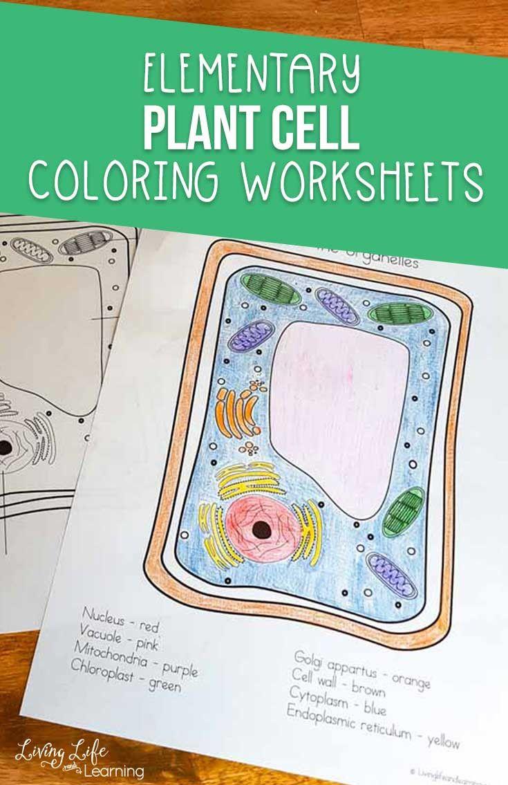 Animal Cells Coloring Worksheet Cells Worksheet Color Worksheets Plant Cell [ 1135 x 735 Pixel ]