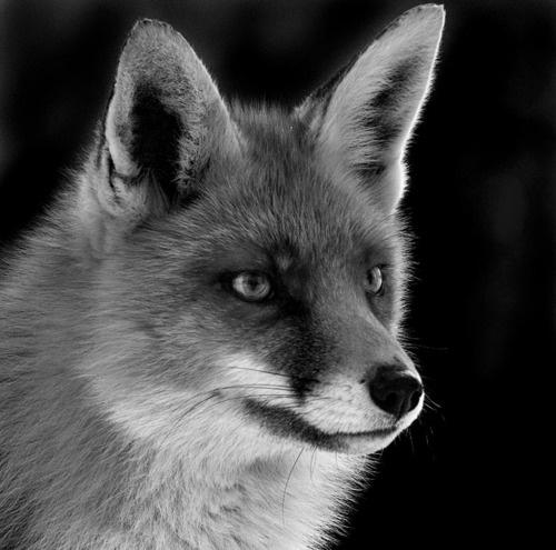 Smart as a fox............