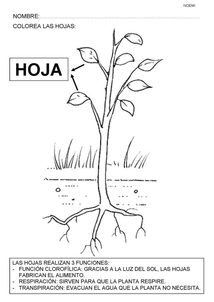 Mejores 194 imágenes de Plantes en Pinterest | Plantas, Escuela y ...