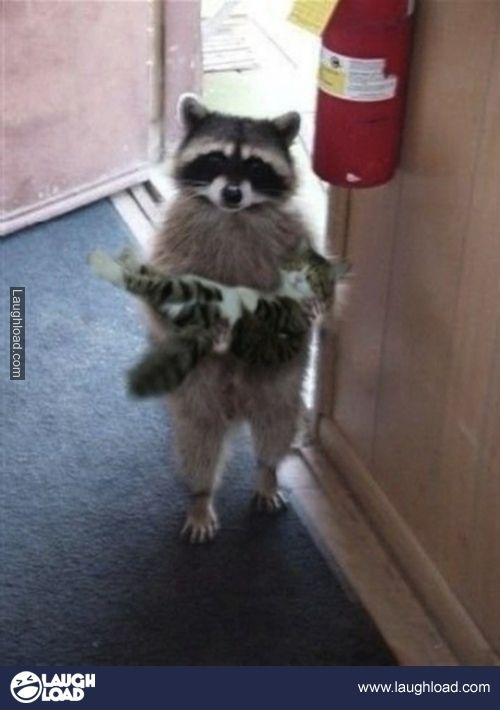 Hello good sir. I found this fluffy little guy outside so I brought him in for you!