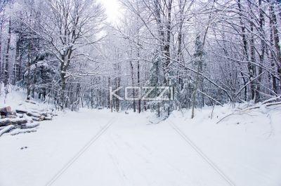 snowy trail - A snowy log road in Haliburton, Ontario