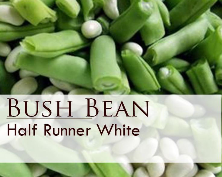 White Half Runner Bean Seeds. Yields an early, heavy crop of tender green pods and sweet flavor