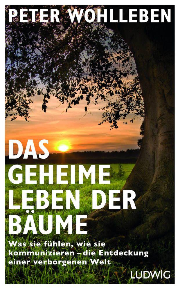 """Mit """"Das geheime Leben der Bäume"""" hat der deutsche Förster Peter Wohlleben einen Bestseller verfasst"""